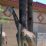 Houston Zoo - 116_8542.JPG