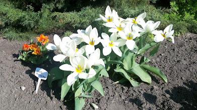 Photo: F4233150 w Ogrodzie Botanicznym