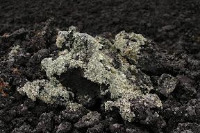 Moss on lava rocks