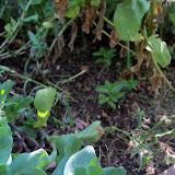 Gardening 2011 - 100_9311.JPG