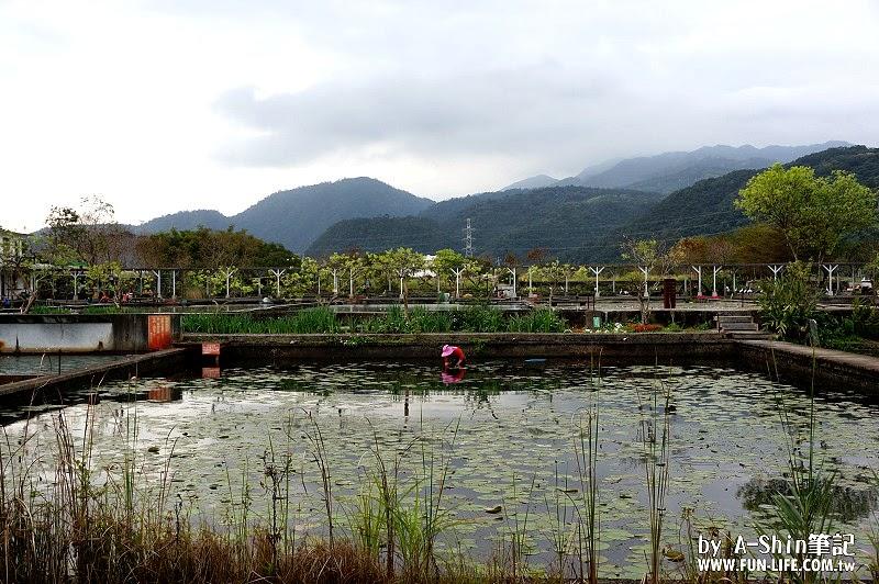 勝洋水草文化館