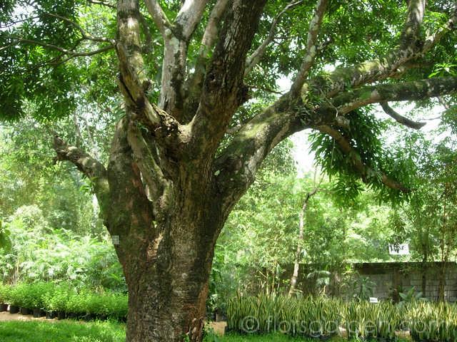 Amenities - main-garden_02.jpg