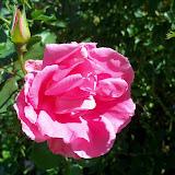 Gardening 2013 - 115_6256.JPG