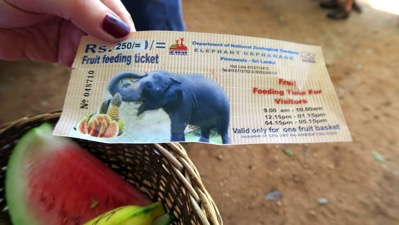 Fruit Feeding Ticket