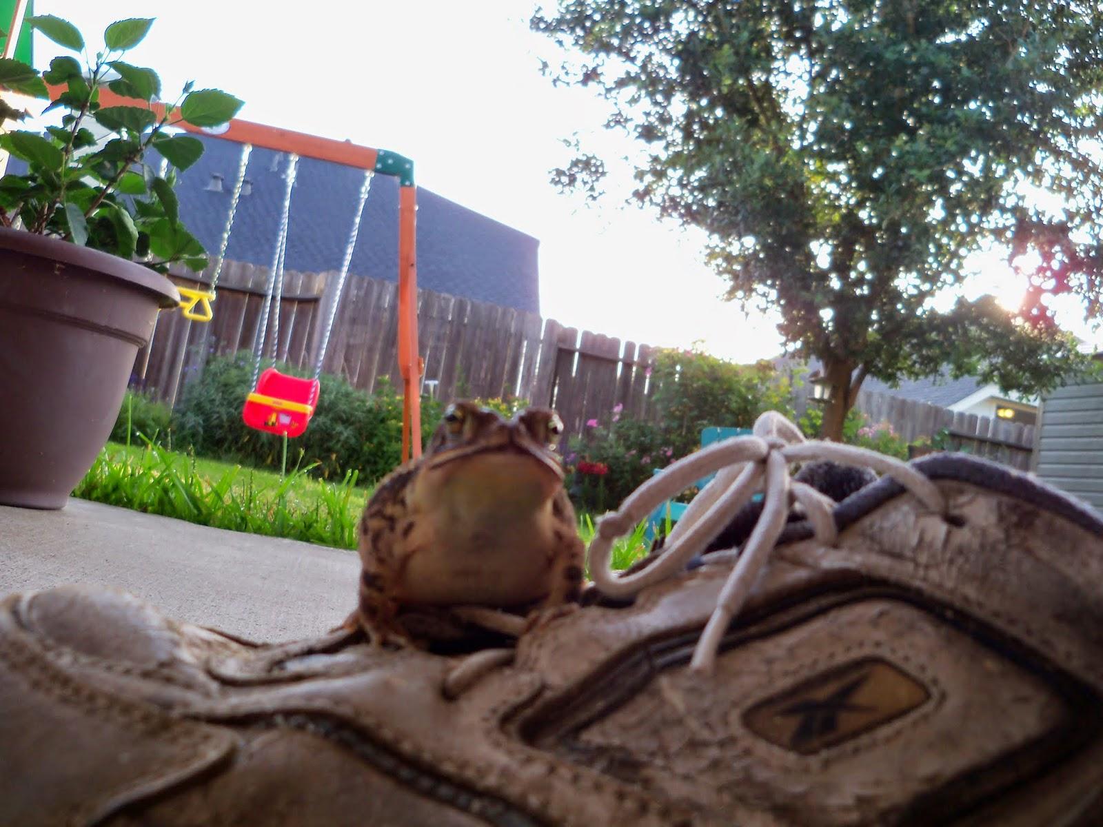 Gardening 2014 - 116_3017.JPG