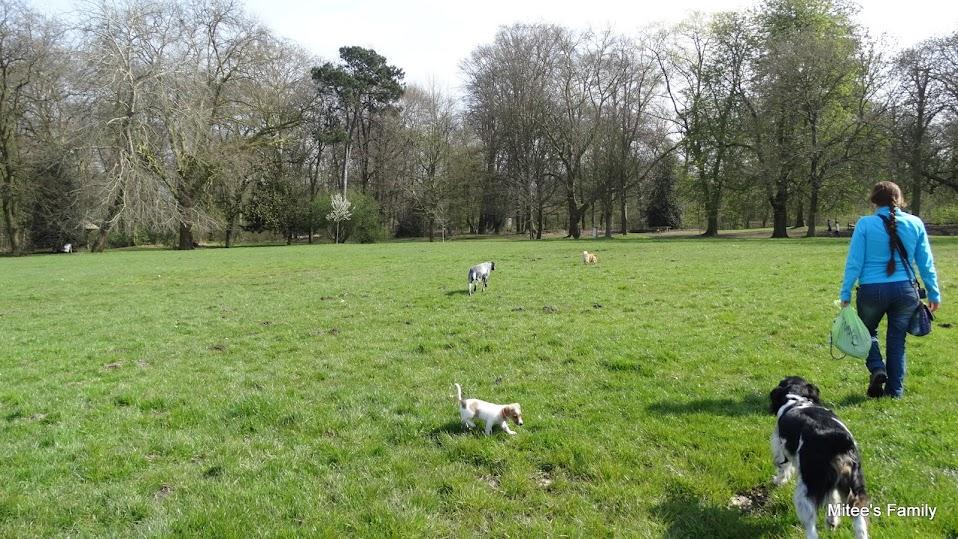 Balades canines en Nord (59)/Pas de Calais (62) - Boulogne-sur-Mer, Calais et Lille - Page 4 DSC01807