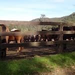 Horses at Glenworth Valley (159298)