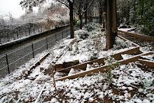 Jardin partagé Luquet