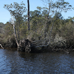 Fowl Marsh from Boat Feb3 2013 113