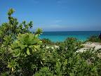 Karibisch