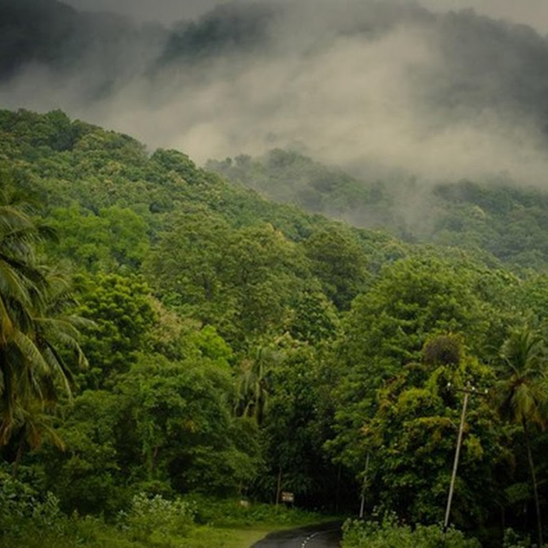 Monsoon Holidays In Kerala: Offbeat Locations In Kerala You Should Be Visiting