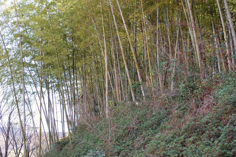 2014 Japan - Dag 9 - jordi-DSC_0731.JPG