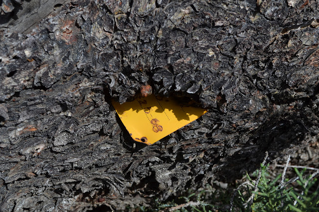 yellow metal eaten by a tree