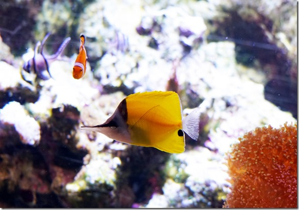 paris aquarium tropicale fish 111115 00000
