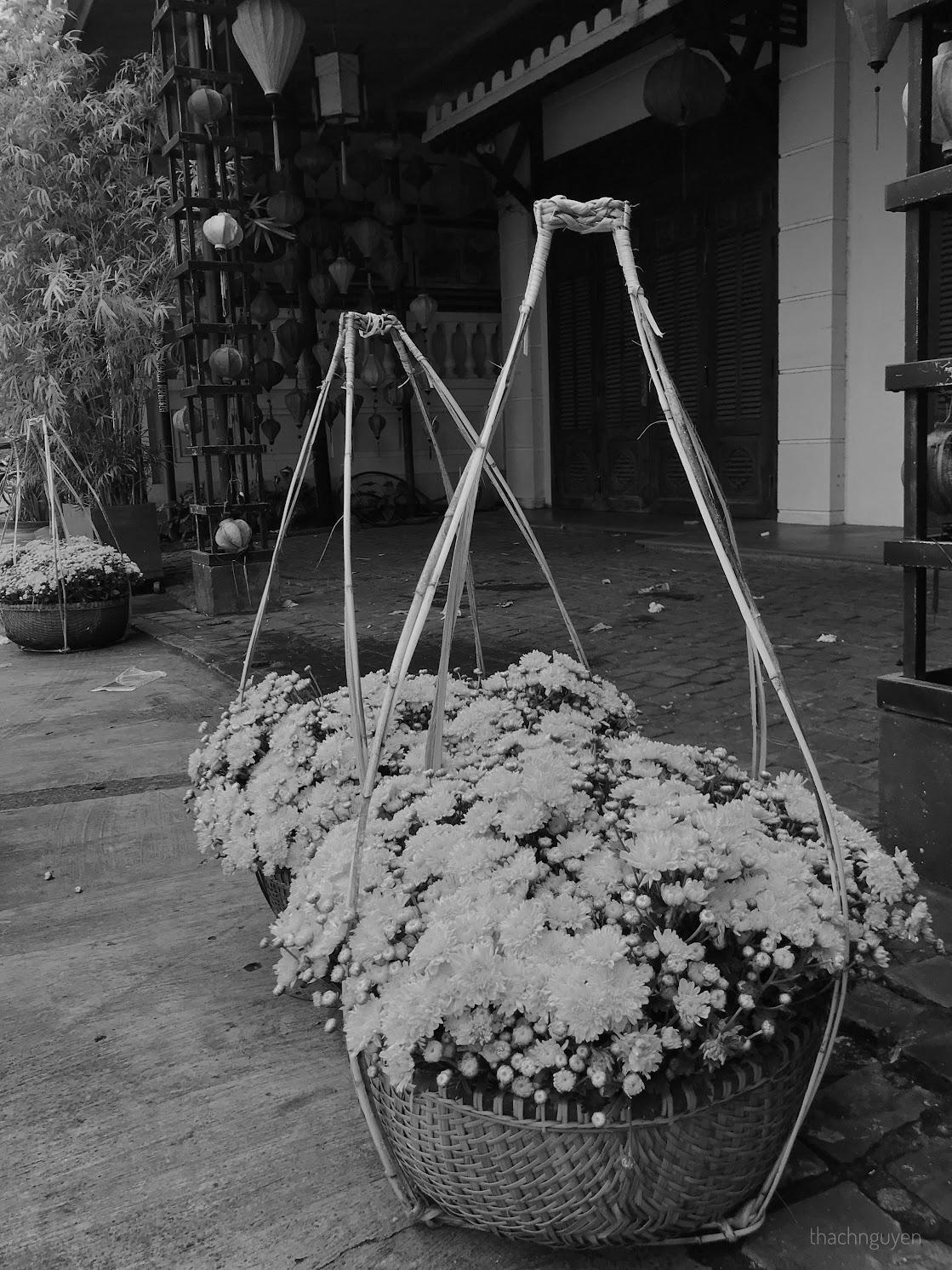 hoa cúc, phố đi bộ hội an