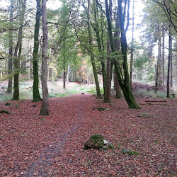Portumna Forest Park's profile photo