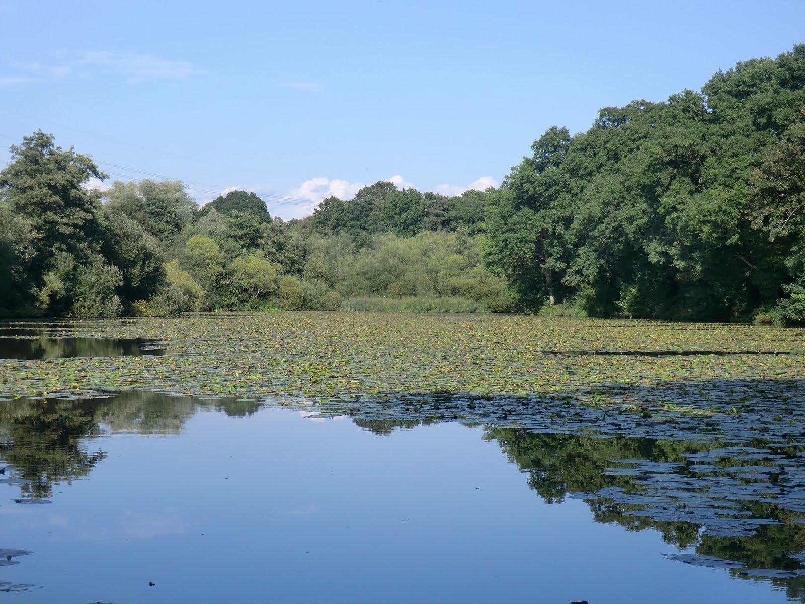 CIMG4147 Valebridge Mill Pond