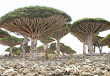 Socotra-thesuiteworld