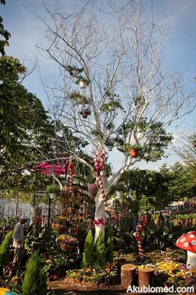 pokok gula-gula