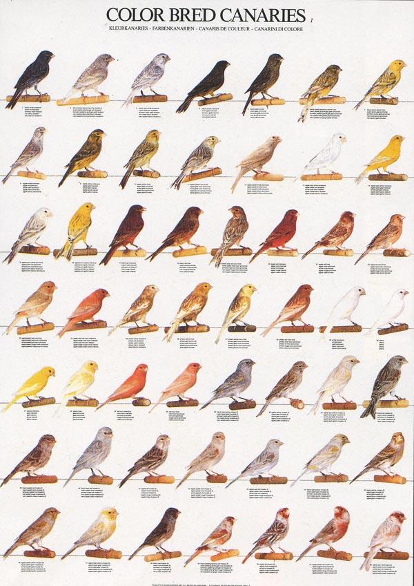 Οργασμός από μεγάλο πουλί