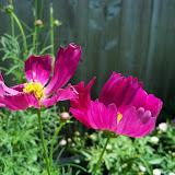 Gardening 2010, Part Three - 101_4287.JPG