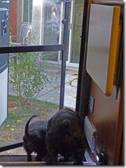 Skruffy and Bubba, Monday Morning back in Sacramento