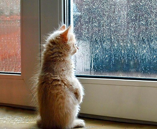 меланхоличные-коты-ждут-хозяина-у-окна-9