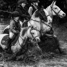 3 muskiteers by Marie Leather - Animals Horses ( trio, nature, water, mud, horses,  )