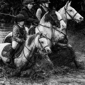 3 muskiteers by Marie Leather - Animals Horses ( trio, nature, water, mud, horses,  )