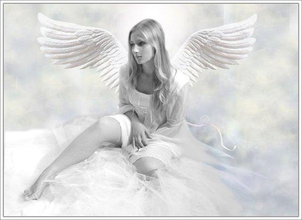 Handsome Angel Look, Angels 4