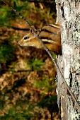 Lynx Trail shots-26.JPG