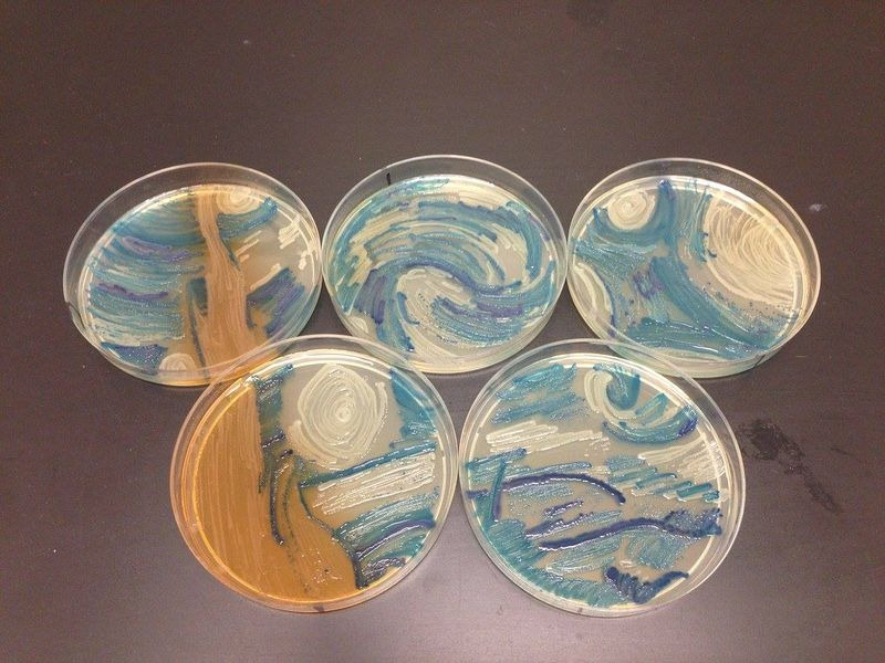 agar-art-contest-7