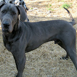 Coby @ 1 1/2 years