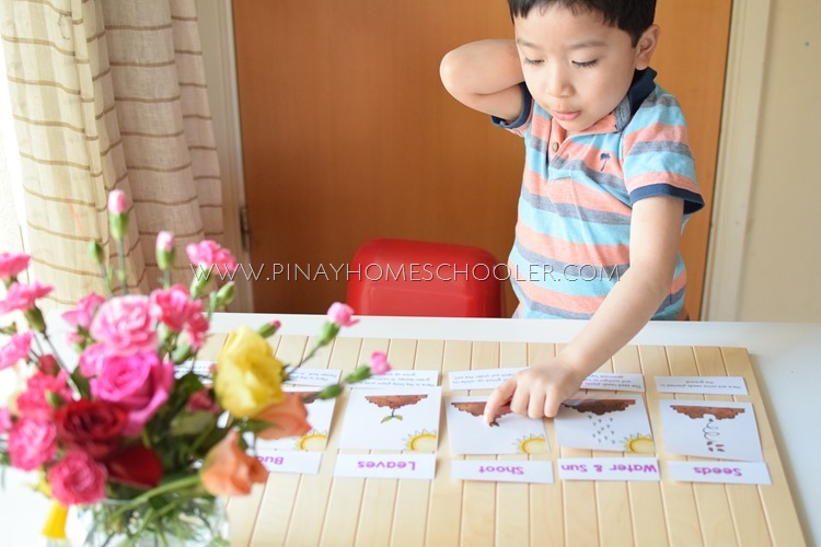 Flowering Plants Sequencing