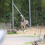 Zoo Snooze 2015 - IMG_7272.JPG