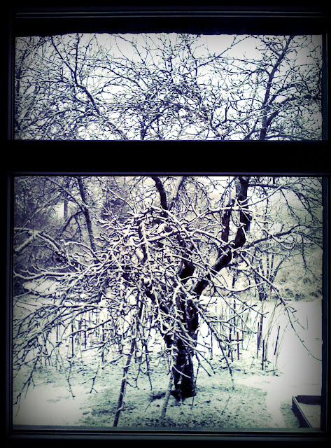 appletree in snow