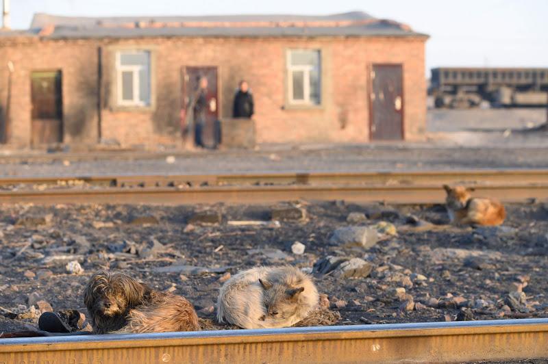 190102 線路沿いに丸まる犬たち