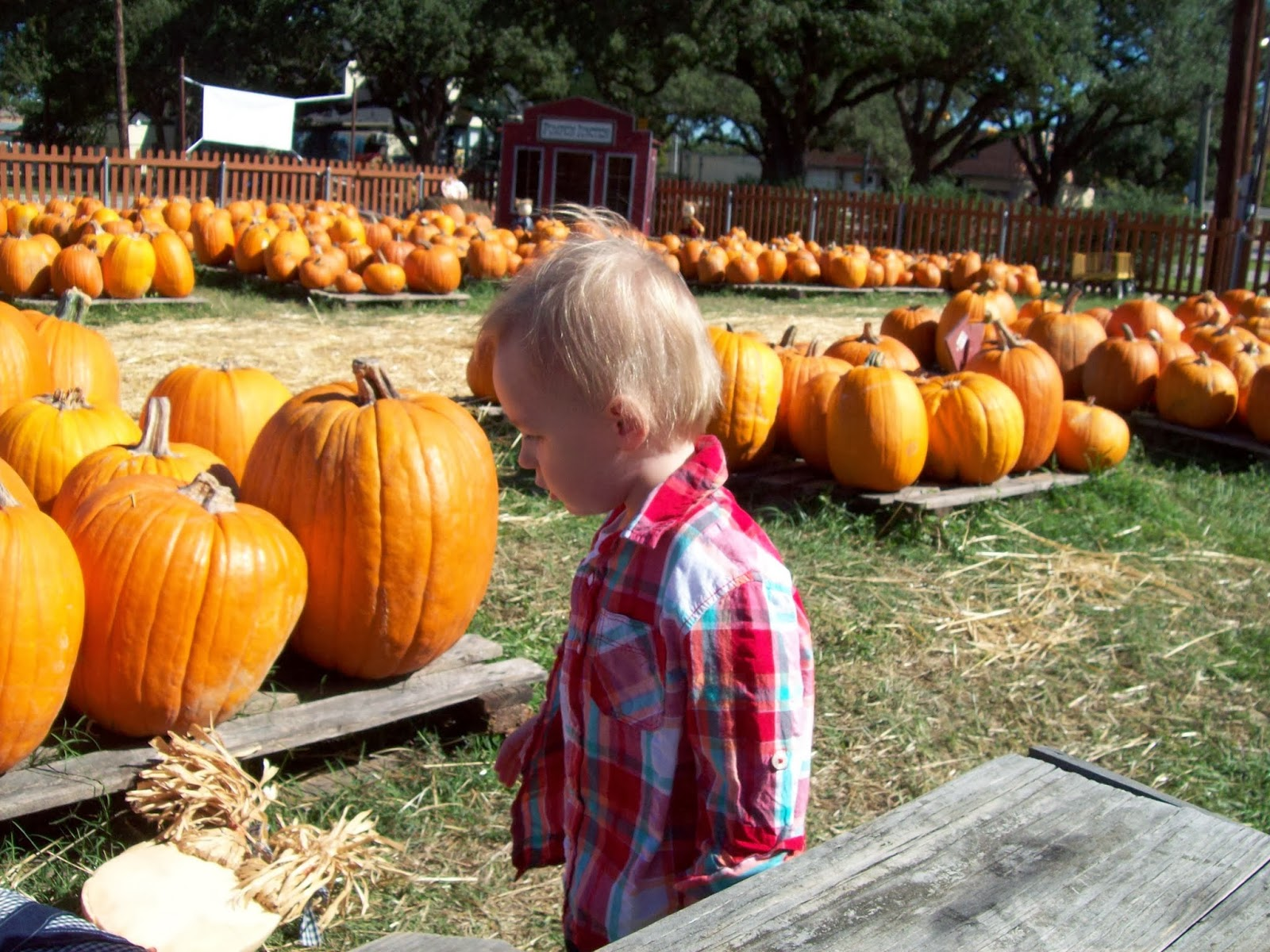 Pumpkin Patch - 114_6544.JPG