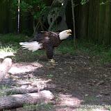 04-07-12 Homosassa Springs State Park - IMGP4573.JPG