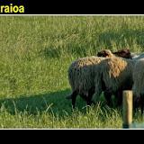 BarriatxiBarria9.jpg