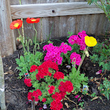Gardening 2011 - 100_7087.JPG