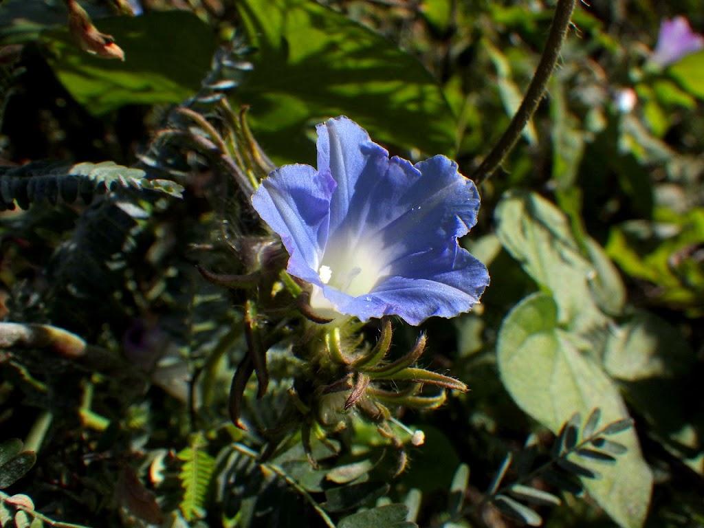 花の写真1青