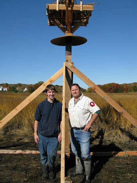 Guilford Salt Meadow Sanctuary Osprey Platform - sfs%252C10-25-09%2Bosprey%2Bplatform%2Binstall%252C135.JPG