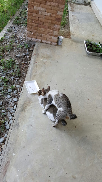 Story About A Mother Cat And It's Kitten
