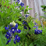 Gardening 2013 - 115_5992.JPG