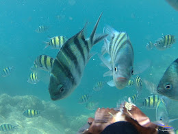pulau harapan, 5-6 september 2015 skc 005