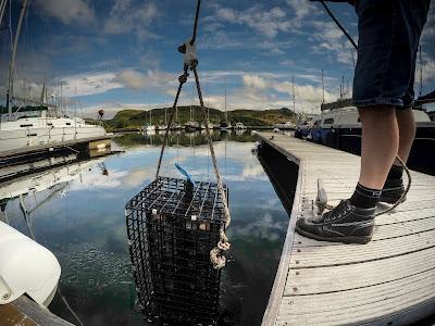 Oyster regeneration