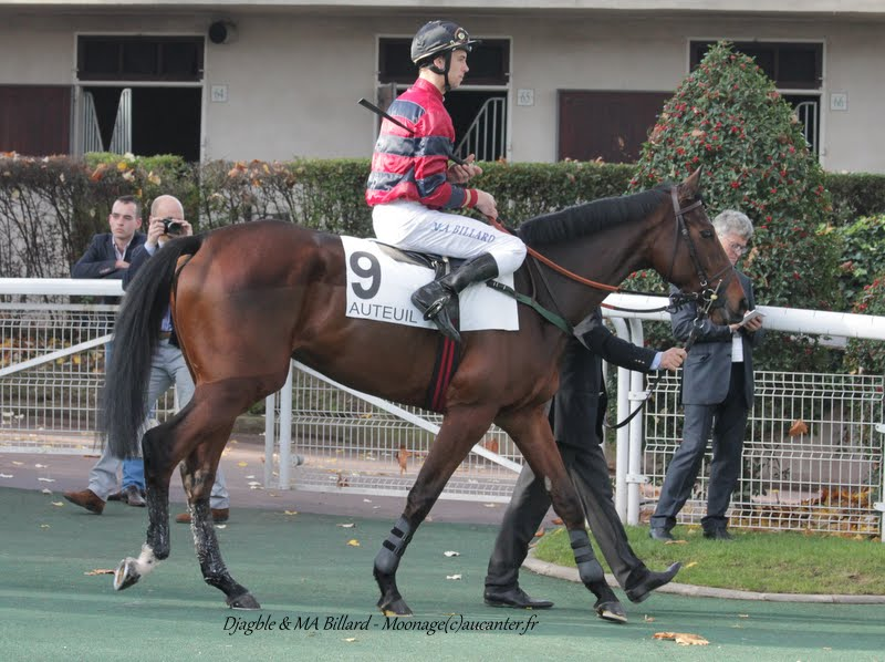 Photos Auteuil 8-11-2015 (48h de l'obstacle) IMG_6993