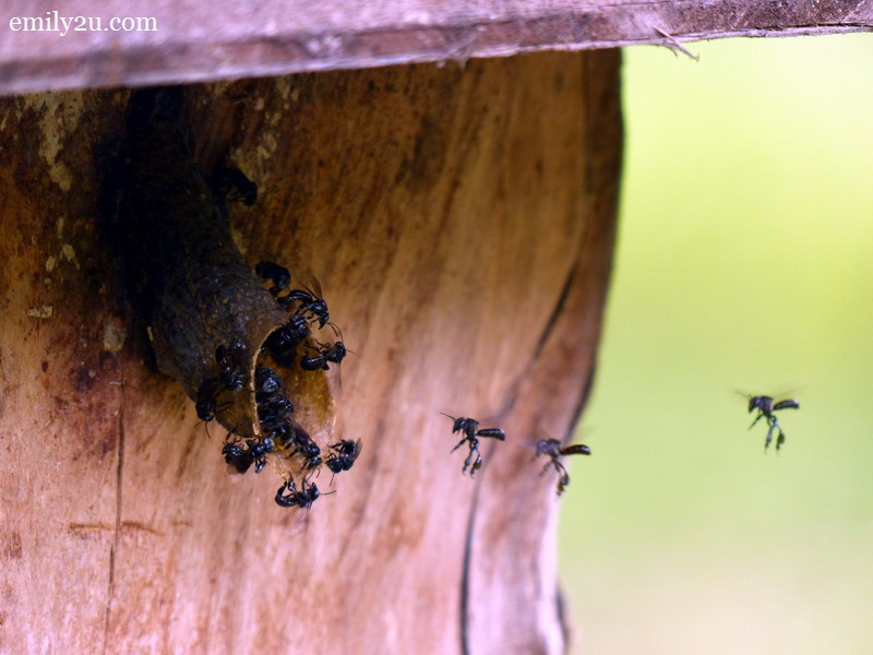 Kampung Alor Limbat Stingless Bee Farm
