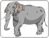 คำศัพท์ภาษาอังกฤษช้าง